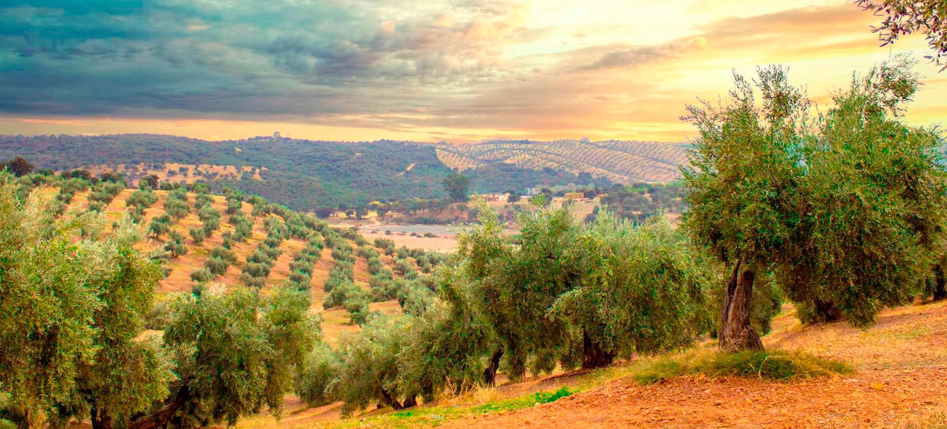 pase-olivos
